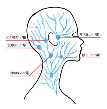 リンパの流れのイメージ