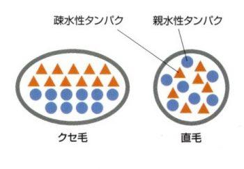 クセ毛のタンパク質・水分バランス2