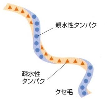 クセ毛のタンパク質・水分バランス1