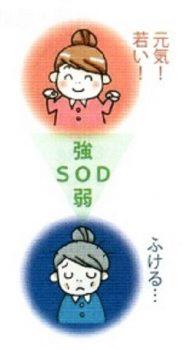 SOD活性値のイメージ