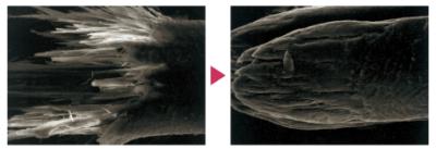 皮膜形成剤「キトフィルム」